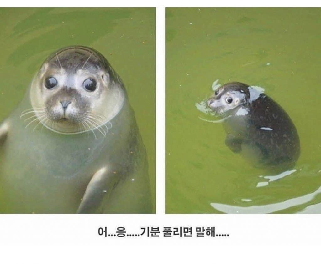 Korean hilarious meme